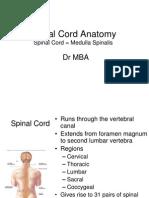 DrMBA Medulla Spinalis