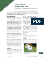 Paper_Encephalitozoon Cuniculi- Infecting the Rabbit Next Door
