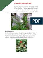 Plante Si Animale Ocrotite de Lege