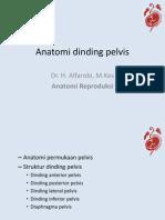 Anatomi Dinding Pelvis
