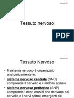 tessutonervoso-131228211136-phpapp02