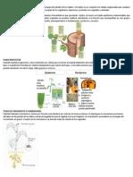 Histología y Organografía