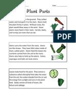 3 Science Plants Plant Parts Information