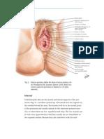 Intern ACOG Bulletin Episiotomy and Repair3