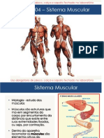 Aula 04 - Sistema Muscular OK (1)