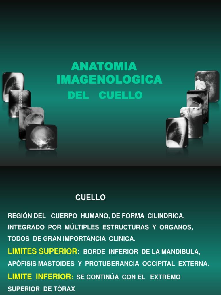 Anatomia Imagenologica Del Cuello