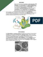 organos celulares.docx