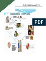 Enfermedades Parasitarias Transmitidas Por Alimentos _ciclos_ _2