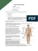 9º Sistema Inmunologico y Linfático