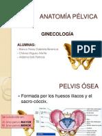 anatomc3ada-pc3a9lvica