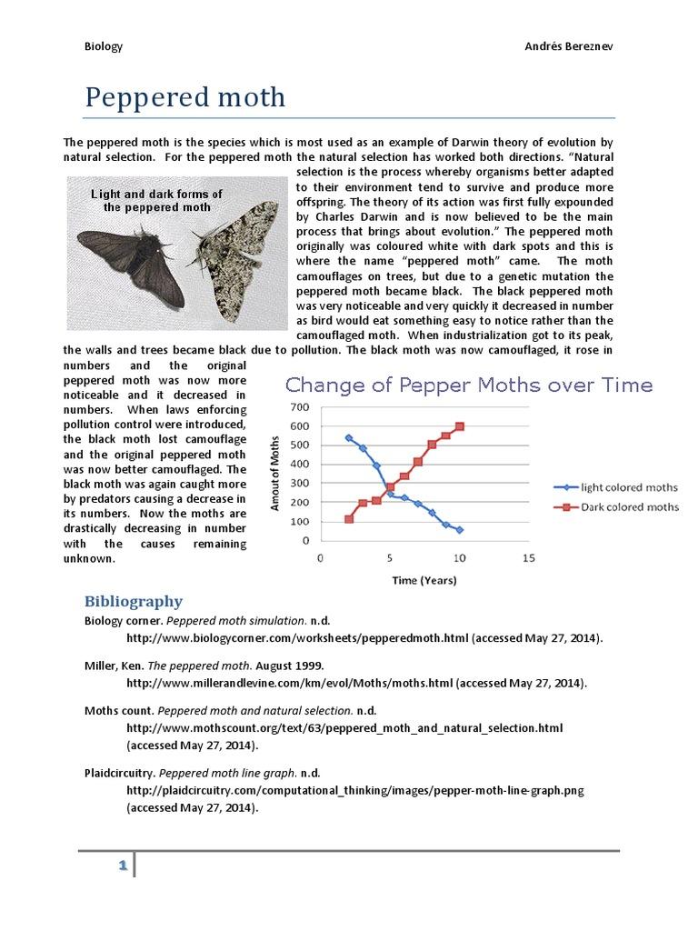 peppered moth. Black Bedroom Furniture Sets. Home Design Ideas