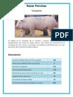 razas porcinas