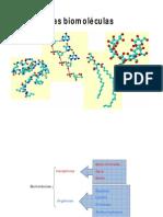 Biomoleculas y Virus (1)