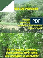 Pădurea de Foioase1 pptx