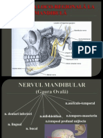 Anestezia LR Mandibula