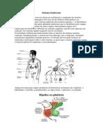 corpo humano(Sistema Endócrino).docx