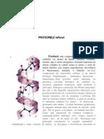 Proteine Referat