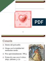 Corazón Dr. Jhersy