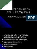 Sem 15 Transf. Celular Maligna