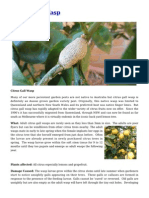 Citrus Gall Wasp Pest Control in your Garden