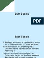 Barr Bodies