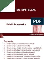 Epitelial_1_11