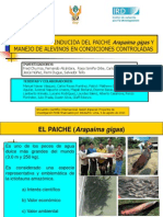 sexo del paiche.pdf