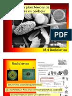 Paleo General Radiolarios