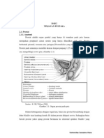 Prostat.pdf