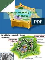 Célula Vegetal 2014