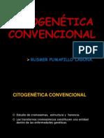 Citogenetica Convencional