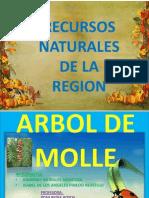 Arbol de Molle