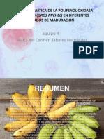 Cinética Enzimática de La Polifenol Oxidasa Del Banano