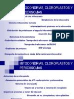 7. Mitocondrias y Cloroplastos
