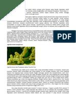 Agrobacterium-tumefaciens