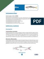 sardina-vieira_tcm89-31511.pdf