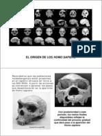 origen homo sapiens