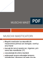 MUSCHII MASTICATORI