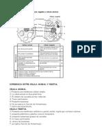Diferencias Célula Animal- Célula Vegetal