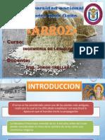 Arroz Expo