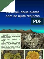 lectie_20_lichenii_doua_plante_care_se_ajuta_reciproc.ppt