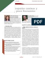 Endocrinopatias Del Perro