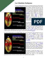 Las Glandulas Endogeneas