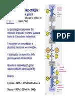 T6-glucoNEO