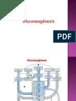Esquemas Clase de Gluconeogenesis