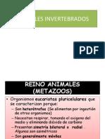 293 Animales Invertebrados
