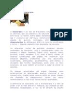 Geoterapia Argilas e Aromaterapia