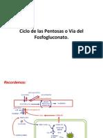 Ciclo de las Pentosas o Vía del Fosfogluconato