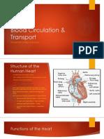 Blood Circulation & Transport