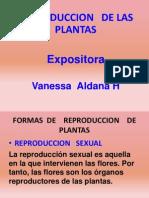Exposicion de Vane de Reproduccion de Plantas